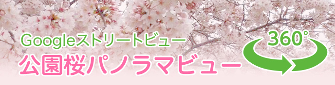 Googleストリートビュー:公園桜パノラマビュー
